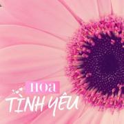 Tải bài hát hay Hoa Tình Yêu Mp3 miễn phí