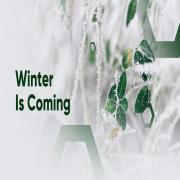 Download nhạc Winter Is Coming miễn phí